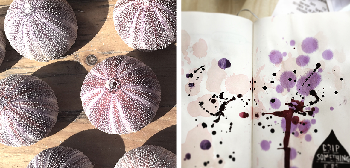 ink-painting-sea-urchin-sandra-jouatte